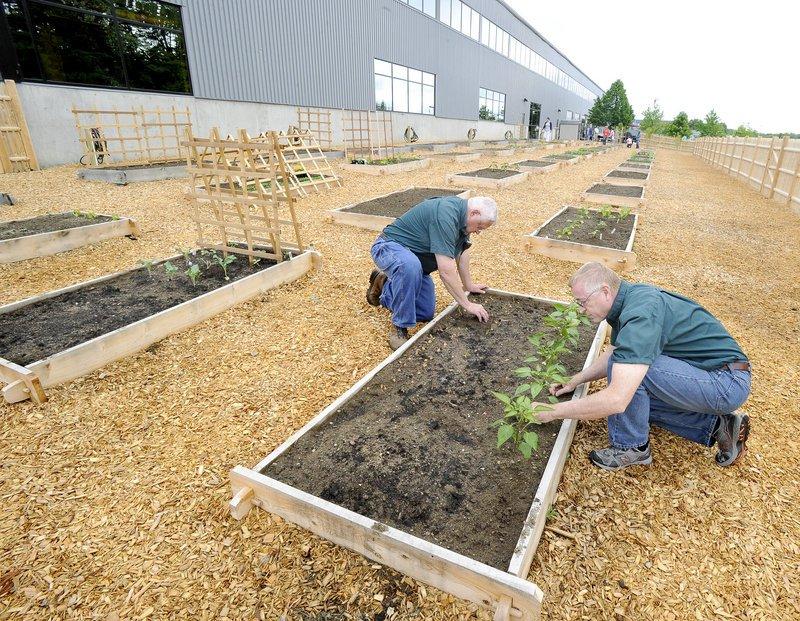 Corporate Garden - Quand les salariés jardinent au bureau.