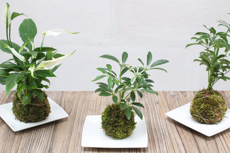 Un atelier de team building green pour décorer vos bureaux avec de belles plantes
