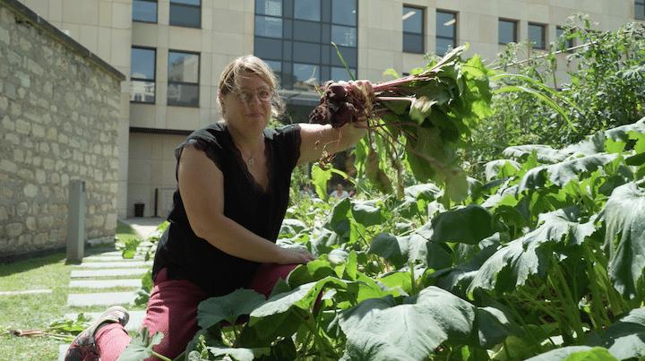 Une pause fertile au potager pour se ressourcer et récolter entre collègues
