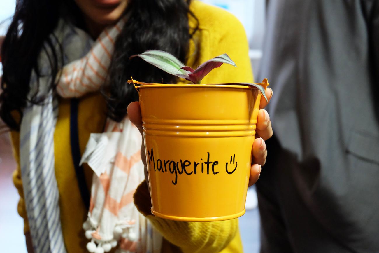 Team building Bouture plante déco