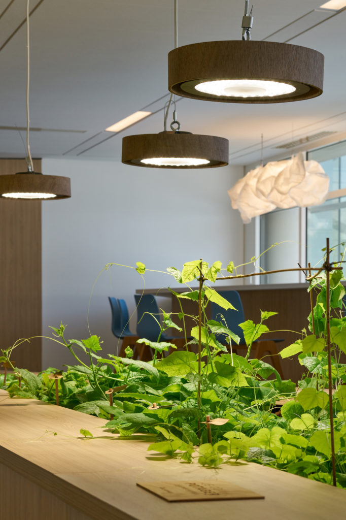 Le potager intérieur offre de belles plantes en bonne santé