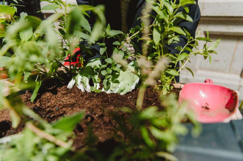 Les collaborateurs participent ensemble au bon développement des plantes