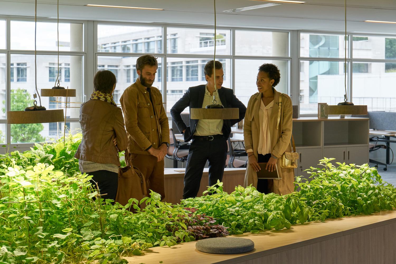 Biophilie-bureaux-innovation-potager d'intérieur