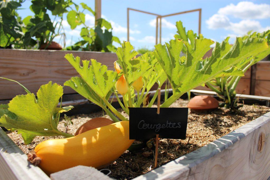 Les légumes poussent au potager participatif d'entreprise