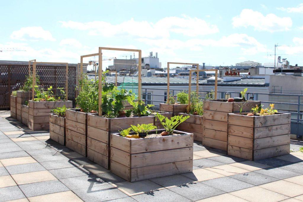 Les bacs accueillent une grande diversité de légumes, de fruits et de plantes.