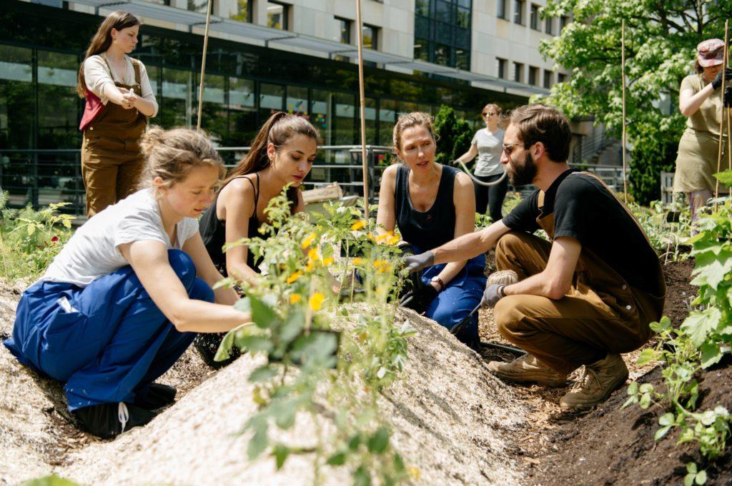 Les collaborateurs, lors des animations au potager, apprennent à découvrir le jardinage et la nature auprès du jardinier-animateur Ciel mon radis