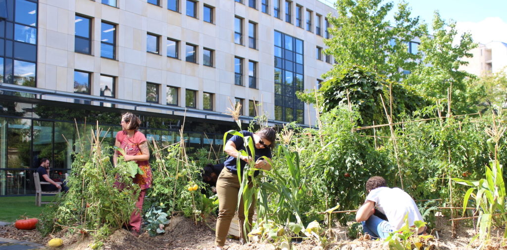 Les collaborateurs du groupe M6 jardinent dans leur potager d'entreprise créé par Ciel mon radis